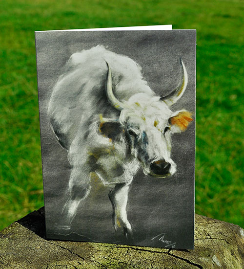 Notecard-Chillingham-Cow