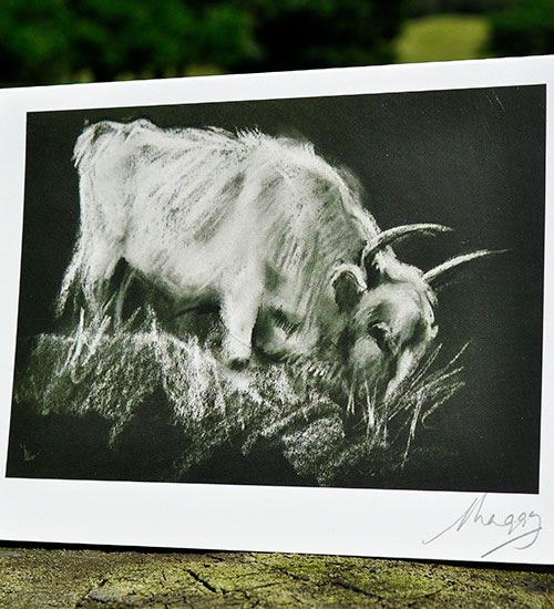 Notecard-Young-Feral-Bull-e1445879438833