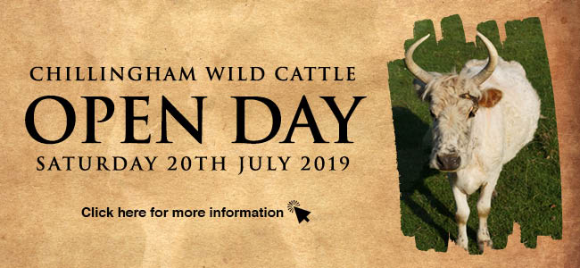 Chillingham Wild Cattle Open Day